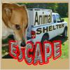 Animal Shelter Escape